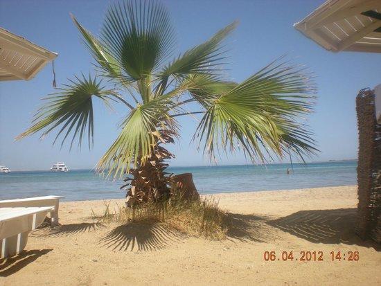 Amira Divers Inn: Собственный пляж