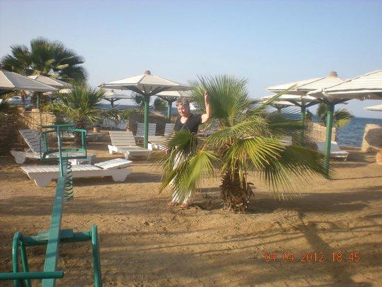 Amira Divers Inn: пляж