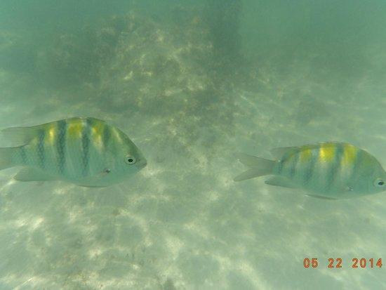 Barcelo Maya Palace: Mas peces bajo el agua
