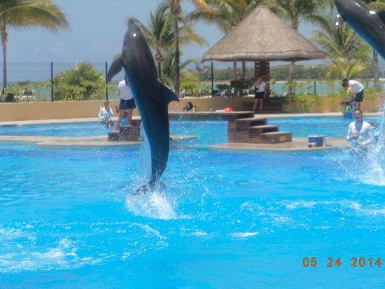 Barcelo Maya Palace: Bellos los delfines.. no se pierdan el show de las 11:30 am