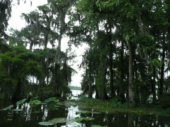 LeBlanc Swamp Tours : lake martin