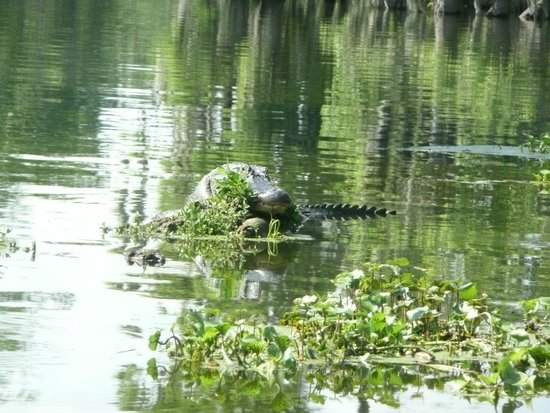 LeBlanc Swamp Tours: lake martin