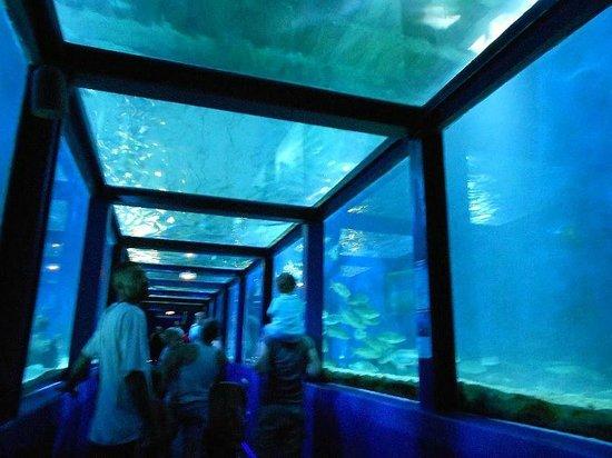 le tunnel des requins photo de seaquarium le grau du roi tripadvisor