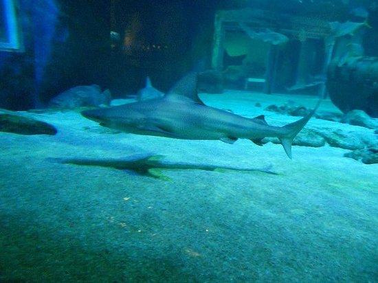 Le tunnel des requins - Picture of Seaquarium, Le Grau-du-Roi ...