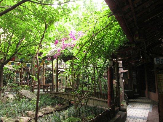 Hello Chengdu International Youth Hostel: the lovely garden