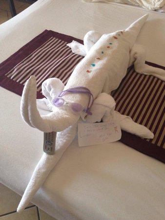 Jaz Belvedere: Our pet croc!