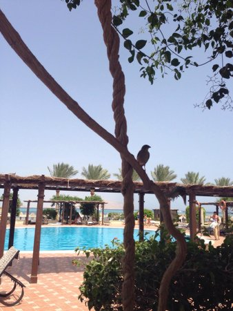 Jaz Belvedere: Sat in the snack bar - looking our across the pool and beach