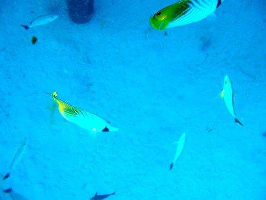 Conrad Bora Bora Nui : Under our bungalow
