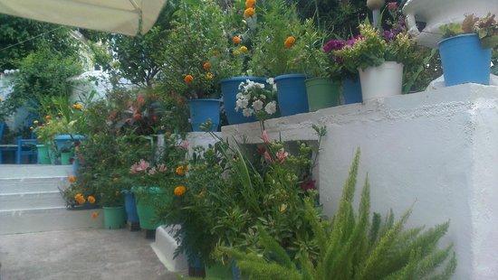 Villa Marina: Partial view of the garden