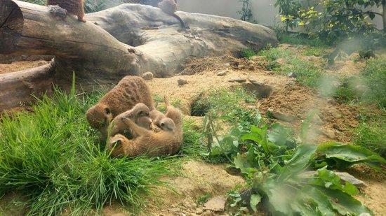 Parc Zoologique : Moment émouvant face aux Suricates (2)