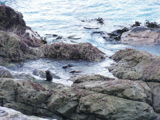 Ohau Stream Walk : Seal Pups playing at Ohau