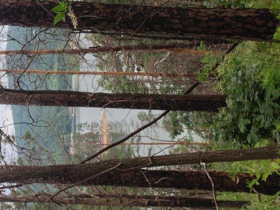 Ouachita National Forest: Caddo Bend Trail