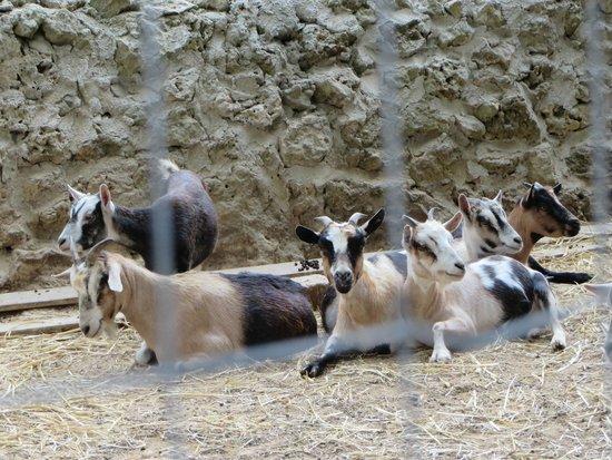 Azienda Agrituristica Scalelle: Dopo pranzo un giro nel mini zoo.