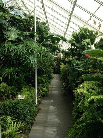 Volunteer Park Conservatory: lush