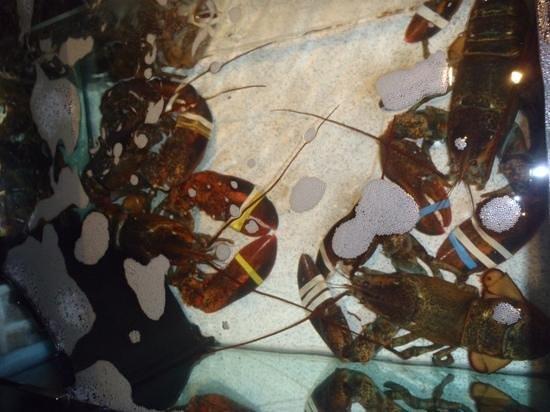 Red Lobster: lagostas para escolher na entrada