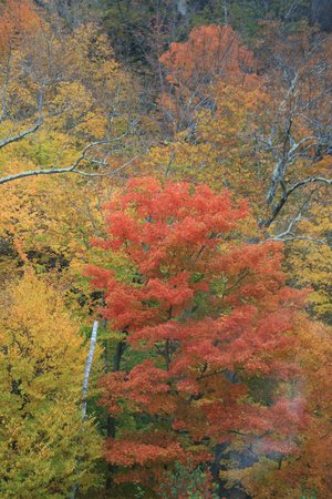 Conway Scenic Railroad: Lovely fall foilage colours