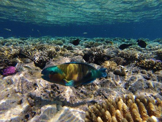 Hilton Sharks Bay Resort: House reef