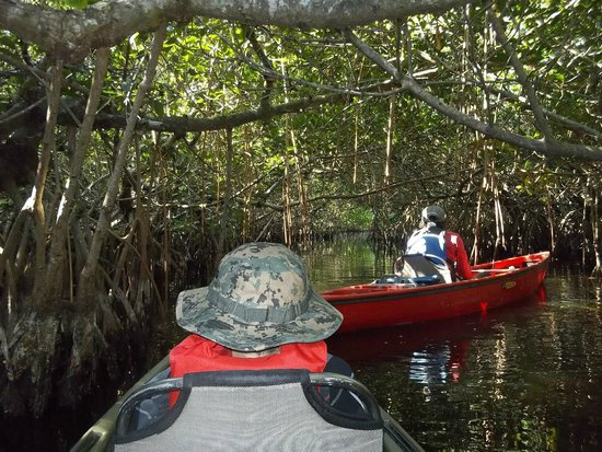Shurr Adventure Company Day Tours: Mangroves