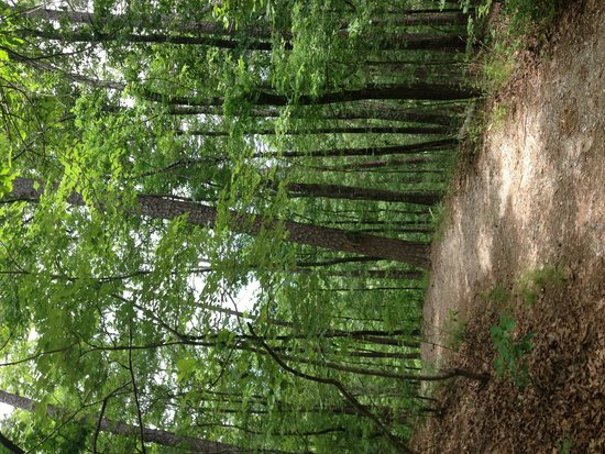 Hot Springs National Park: Lovely wide Hot Springs Mountain Trail