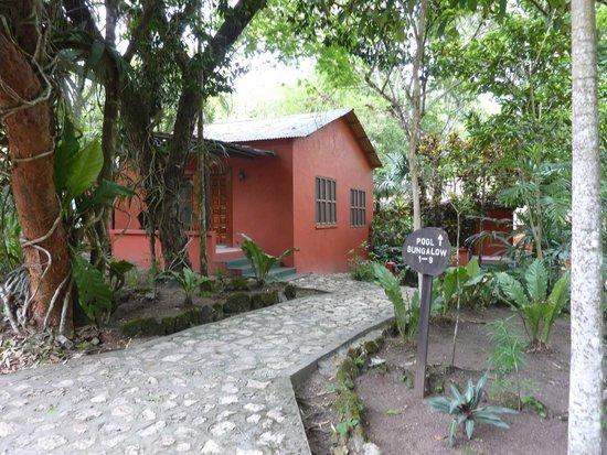 Jungle Lodge Hotel : Walkway from pool area