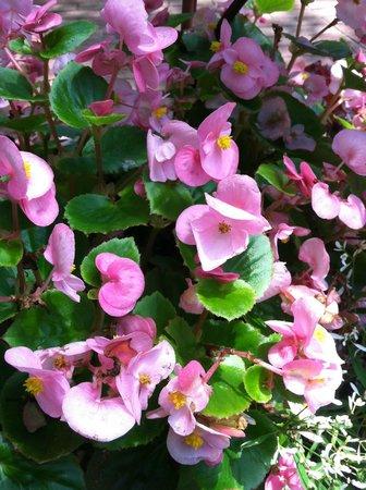 Biltmore Estate : Flores