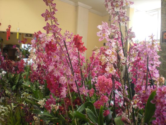 Ecuagenera - Orchids from Ecuador: Shop flowers for sale