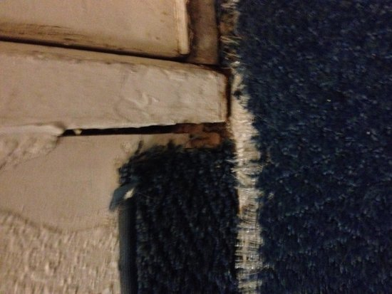 Motel 6 Owensboro: Large open crack at door for bugs to come in through, also terrible carpet.