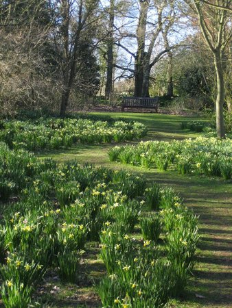 Spring at The Dorothy Clive garden