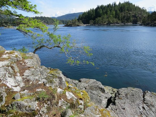 Discovery Islands Lodge : Surge Narrows trail