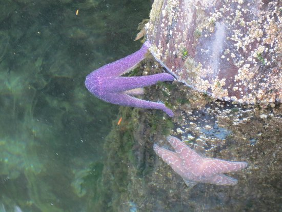 Discovery Islands Lodge : Starfish