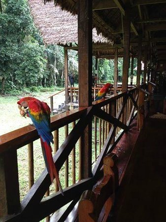 Tambopata Research Center : Breakfast Visitors