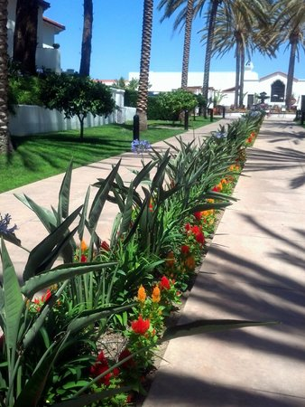 Omni La Costa Resort & Spa: Beautiful landscaping!