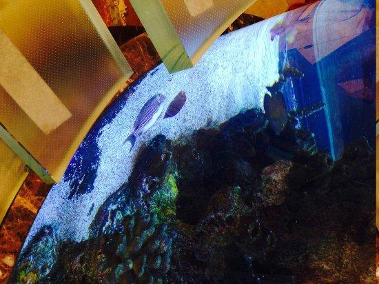 Flatiron Hotel: The first sea fish we saw on the tank