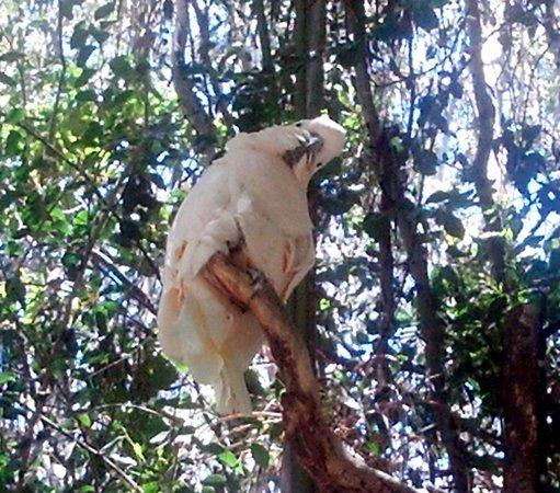 San Diego Zoo Safari Park: THE Cockatoo