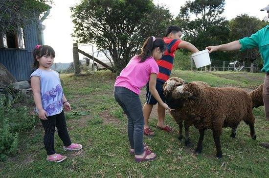 Worendo Cottages: Kids love sheep feeding
