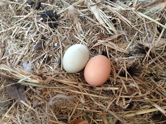 Worendo Cottages: Chicken eggs