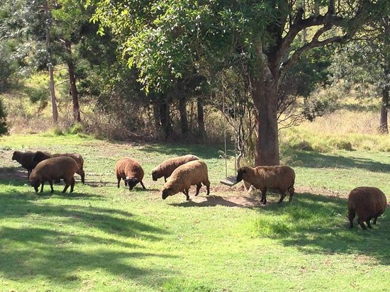 Worendo Cottages: Sheep came to say 'Good Morning'