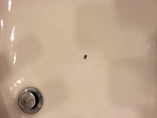 Sheraton Music City Hotel: Bug in sink