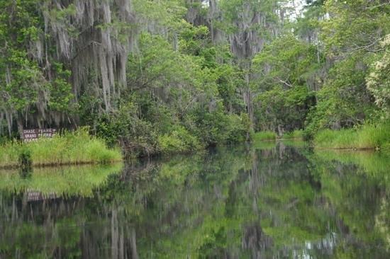 Okefenokee Adventures: swamp opening its way to beauty