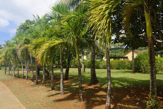 Mariana Resort & Spa: сад