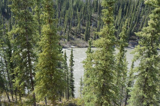Denali Grizzly Bear Resort: The river that runs right behind building D