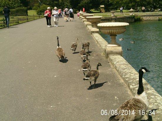 Royal Botanic Gardens Kew: A new family out for a walk