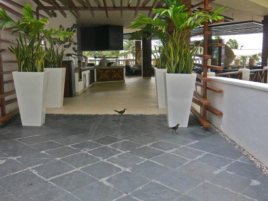 Secrets Silversands Riviera Cancun: outdoor dining