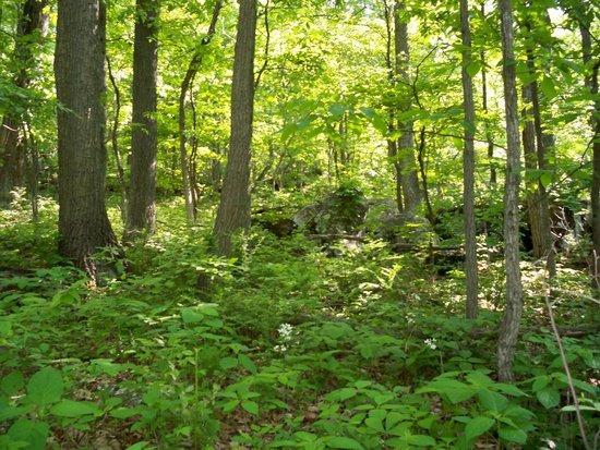 Gettysburg / Battlefield KOA: Woods at KOA