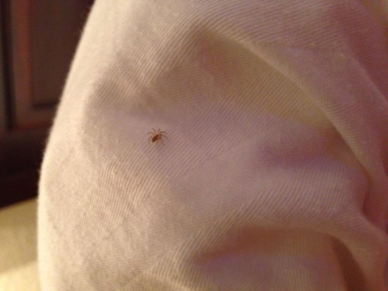 Chase Suite Hotel Baton Rouge: Spider in my bed