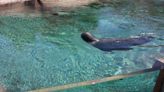 Lincoln Park Zoo : One of three seals