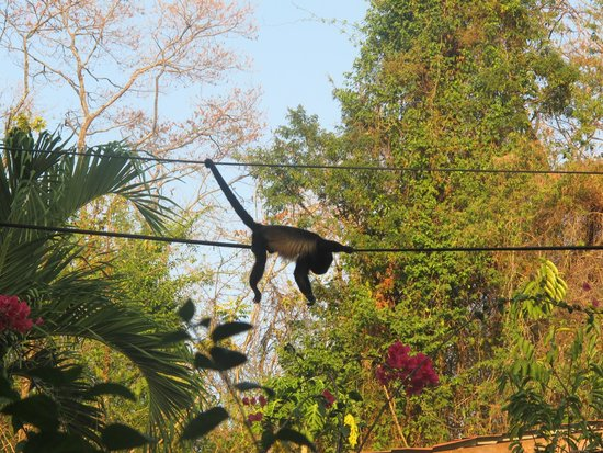 Entre Dos Aguas: groups of monkeys would move through the trees every couple of days