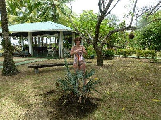 Hotel La Tranquilidad: My own palm tree