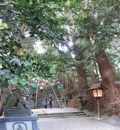 Takachiho Shrine: знаменитые кедры на входе