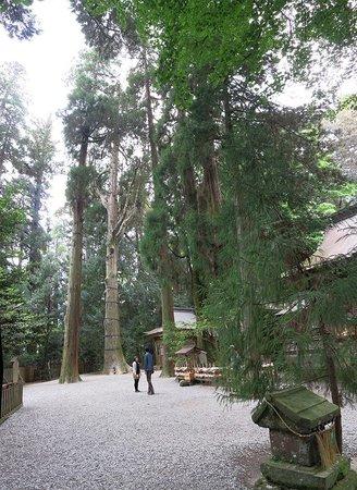 Takachiho Shrine: кедры на территории
